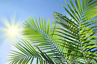 Palm branches in the sun