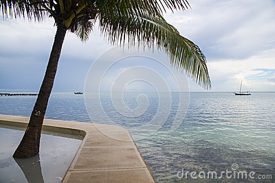 Palm and carribean sea