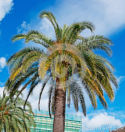 Palm in the city
