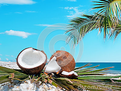 Palm and coconuts