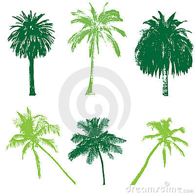 Palm collection for your design