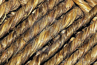 Palm Cord Texture