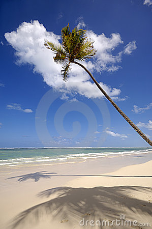 Palm on exotic beach