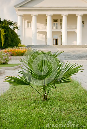 Palm in foreground of palace