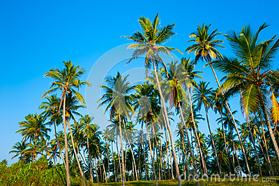 Palm forest