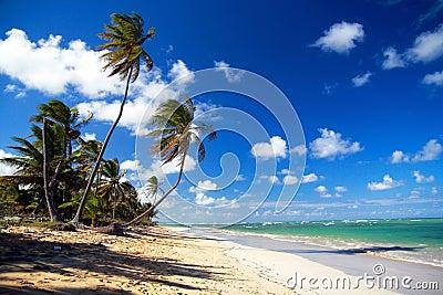 Palm forest on caribbean beach