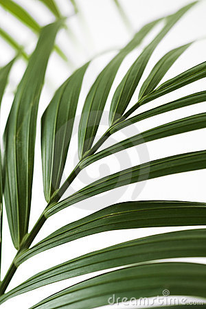 Free Palm Frond. Stock Photos - 2045073