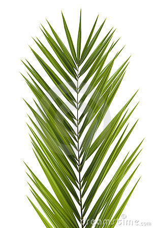 Free Palm Frond Stock Images - 3737964