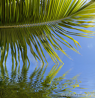 Palm frond reflected in water