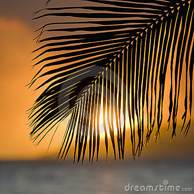 Free Palm Frond Sunset. Stock Photos - 4486773