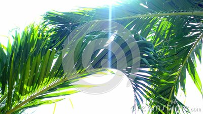 Palm fronds against a bright sky with sun bokeh effect stock video