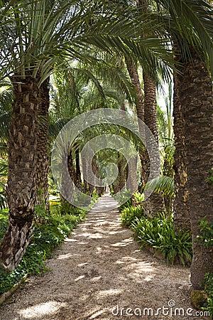 Palm Garden - Elche - Spain