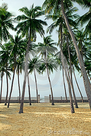 Palm grove on a tropical beach