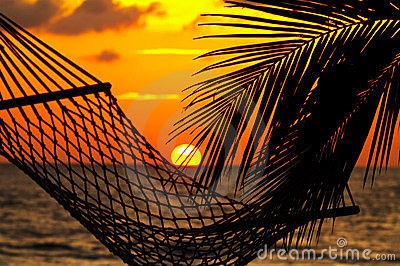 Palm, hammock and sunset