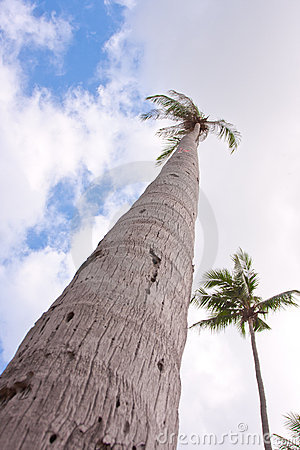 Palm hight