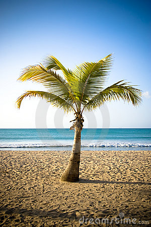 Free Palm II Royalty Free Stock Photos - 5240518