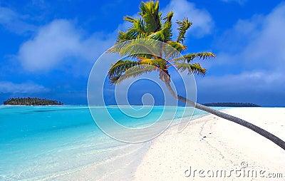 Palm II van het paradijs