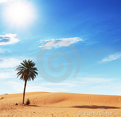 Free Palm In Desert Stock Image - 8149781