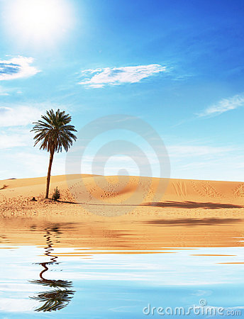 Free Palm In Desert Royalty Free Stock Images - 8391259
