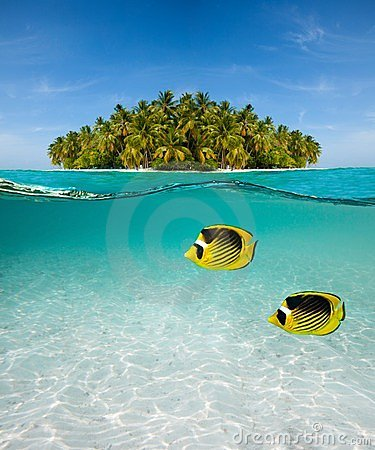 Palm island and underwater world