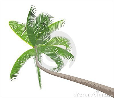 Palm isolated on white