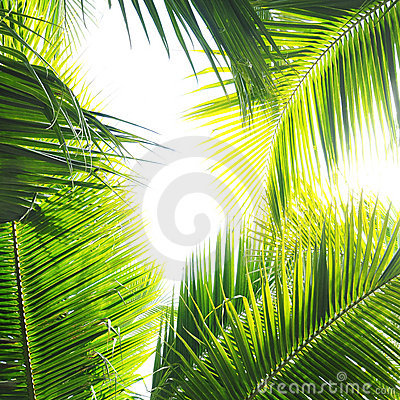 Free Palm Jungle Stock Photo - 11705540