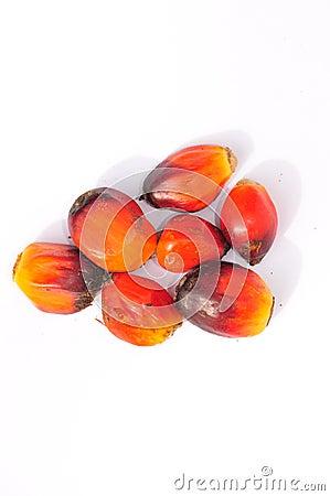 Palm Kernel Seeds
