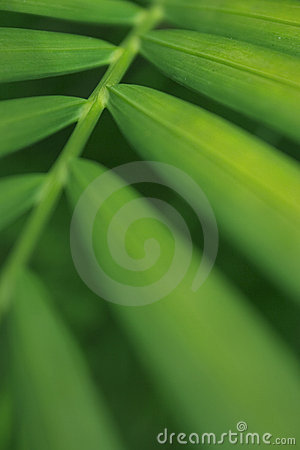 Free Palm Leaf Royalty Free Stock Photography - 212967