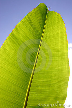 Free Palm Leaf Stock Images - 248924