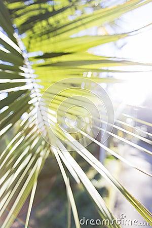 Free Palm Leaf Stock Photo - 78972820