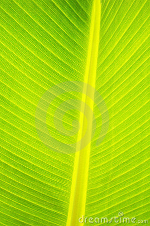Palm leaf abstract in close up
