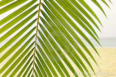 Palm Leaf on the beach