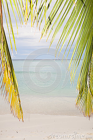 Palm leaf and the beach