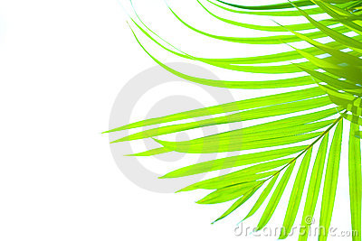 Palm leaf blowing in the sun