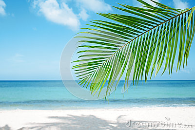 Palm leaf, blue sea and tropical white sand beach Stock Photo