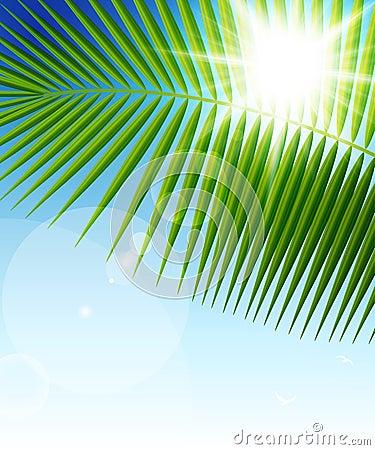 Palm leaf on blue sky and sun beams