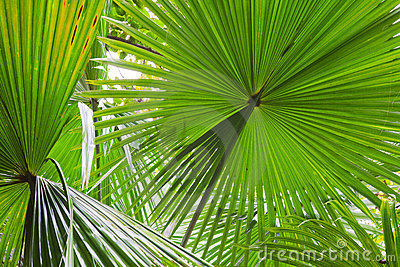 Palm leaf detail green rain forest background