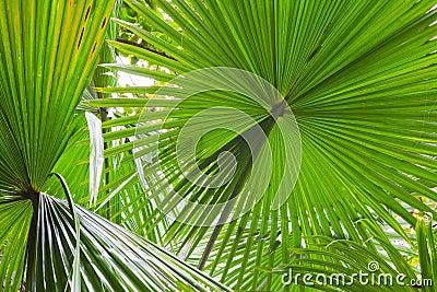 Palm leaf detail green rain forest background