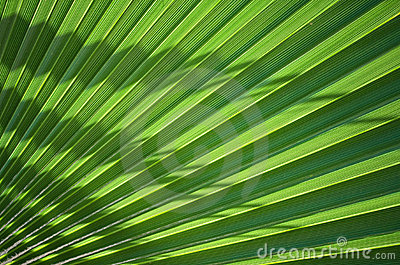 Palm Leaf section
