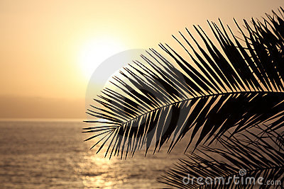 Palm leaf silhouette at sunset