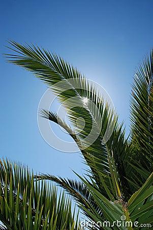 Palm leaf on the sky