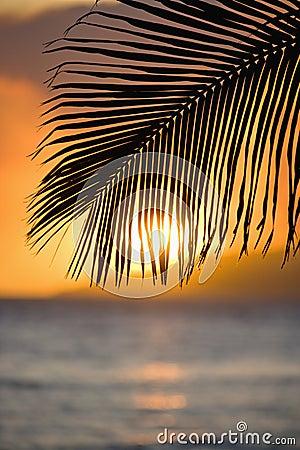 Palm leaf at sunset.