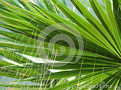 Palm leaf textures
