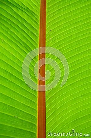 Palm leave shine