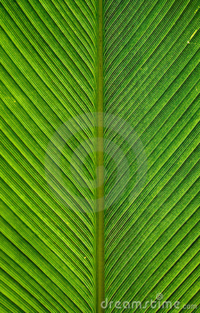 Free Palm Leaves Royalty Free Stock Photo - 21728585
