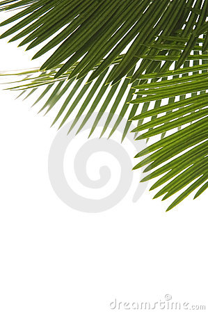 Free Palm Leaves Stock Photos - 2637293