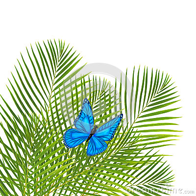 Palm leaves with butterfly