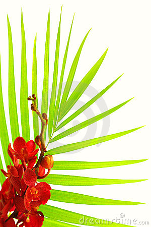 Palm leaves and red orchid