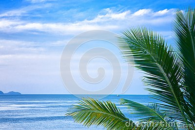 Palm leaves and the sea