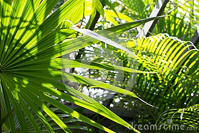 Palm leaves in the sun